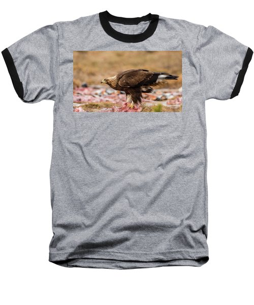 Golden Eagle's Profile Baseball T-Shirt by Torbjorn Swenelius