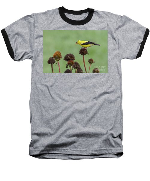 Goldfinch And Coneflowers Baseball T-Shirt