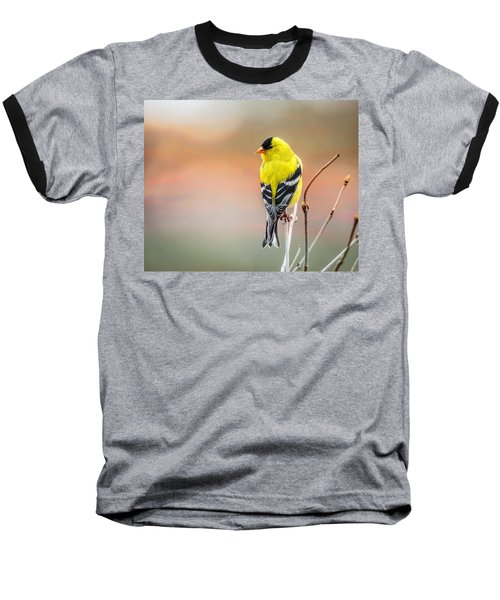 Goldfinch At Sunrise Baseball T-Shirt by Susan Capuano
