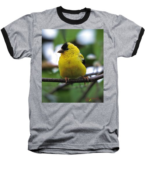 Goldfinch Baseball T-Shirt by John Selmer Sr