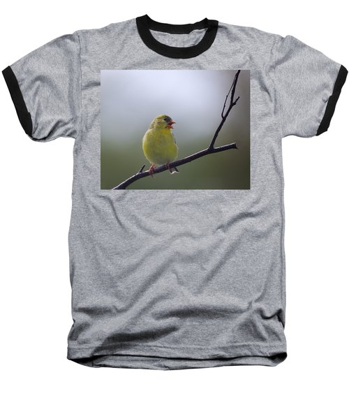 Baseball T-Shirt featuring the photograph Goldfinch Song by Susan Capuano