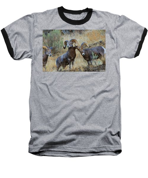Got An Itch... Baseball T-Shirt by Steve Warnstaff
