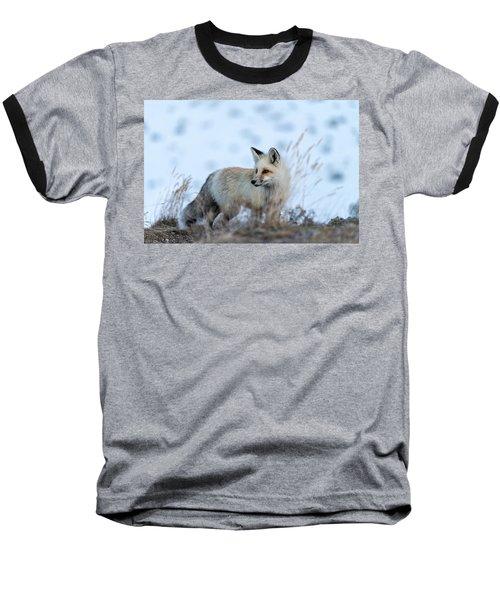 Grand Teton Fox Baseball T-Shirt