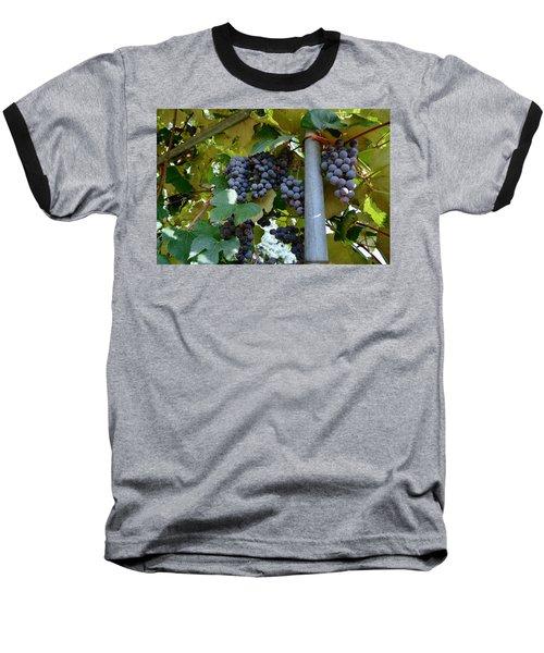 Grape Arbor 1 Baseball T-Shirt
