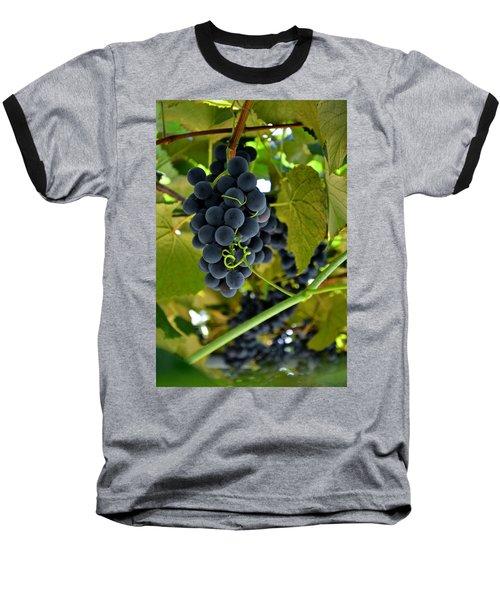 Grape Arbor 2 Baseball T-Shirt