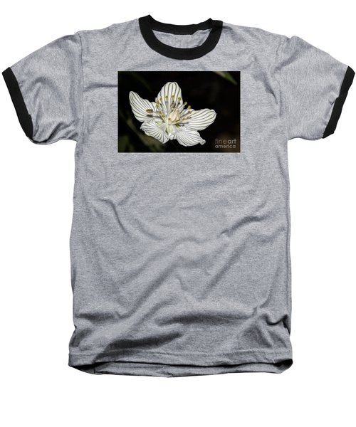 Grass Of Parnassus Baseball T-Shirt by Barbara Bowen