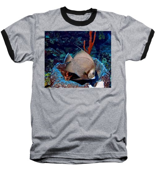 Gray Angel Fish And Sponge Baseball T-Shirt