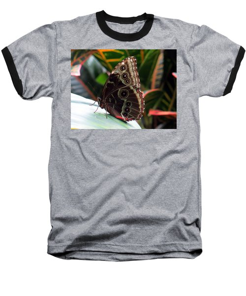 Gray Cracker Butterfly Baseball T-Shirt