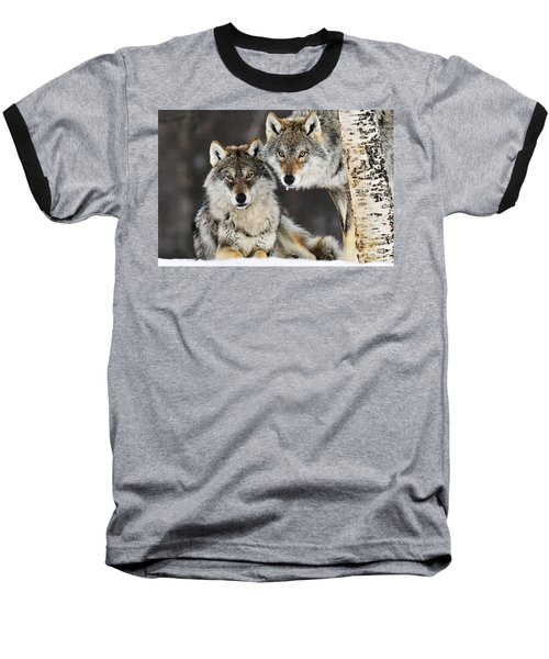 Gray Wolf Canis Lupus Pair In The Snow Baseball T-Shirt