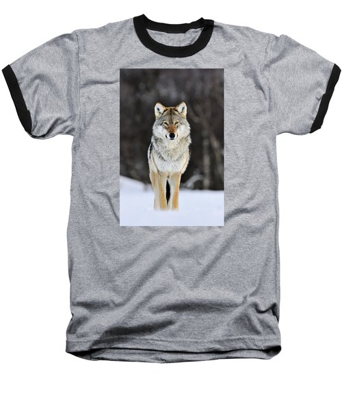 Gray Wolf In The Snow Baseball T-Shirt