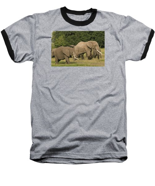 Grazing Elephants Baseball T-Shirt