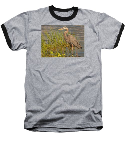 Great Blue At The Park Baseball T-Shirt by Don Durfee