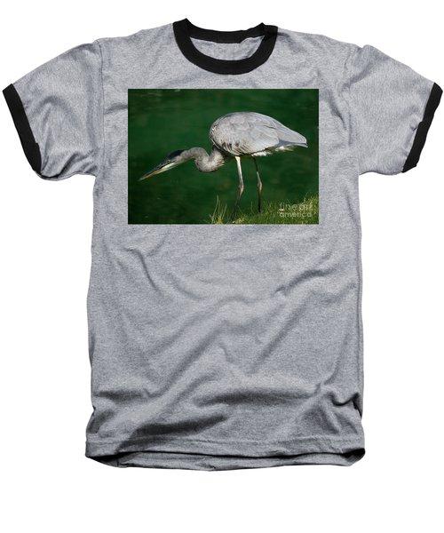Great Blue Heron Series Baseball T-Shirt