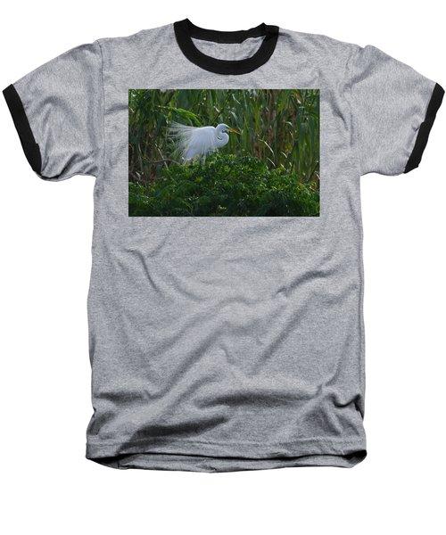 Great Egret Displays Windy Plumage Baseball T-Shirt