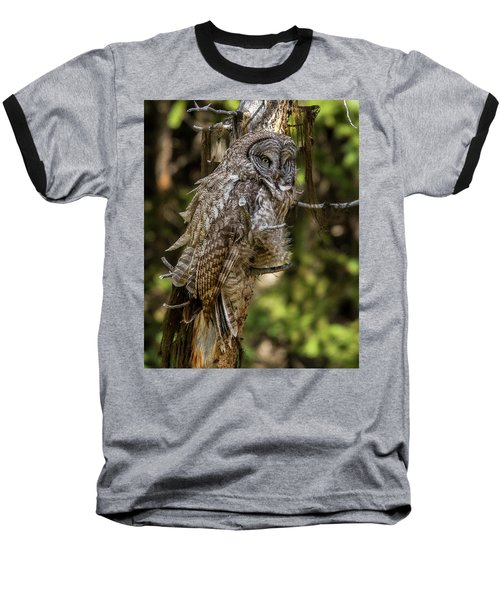 Great Grey Owl In Windy Spring Baseball T-Shirt by Yeates Photography