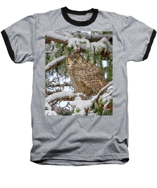 Great Horned Owl In Snow Baseball T-Shirt by Jack Bell