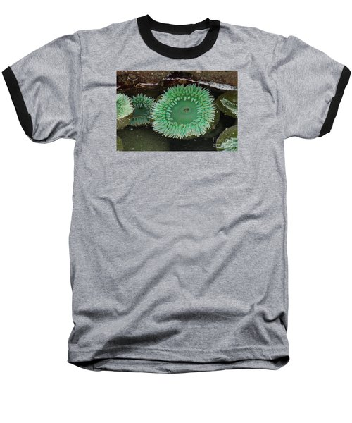Green Anemone Baseball T-Shirt by Chuck Flewelling