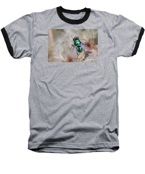Green Bottle Fly Baseball T-Shirt by Jivko Nakev