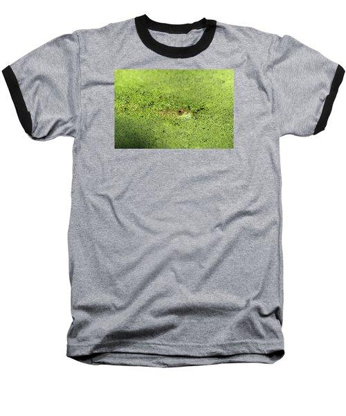 Green Frog Stony Brook New York Baseball T-Shirt by Bob Savage