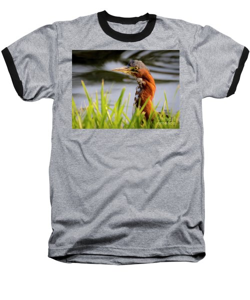 Green Heron Closeup  Baseball T-Shirt