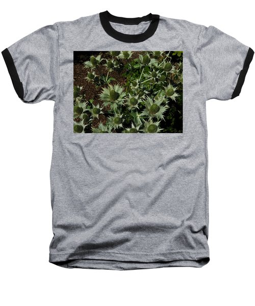Green Thistles In Botanical Garden Of Bern Baseball T-Shirt