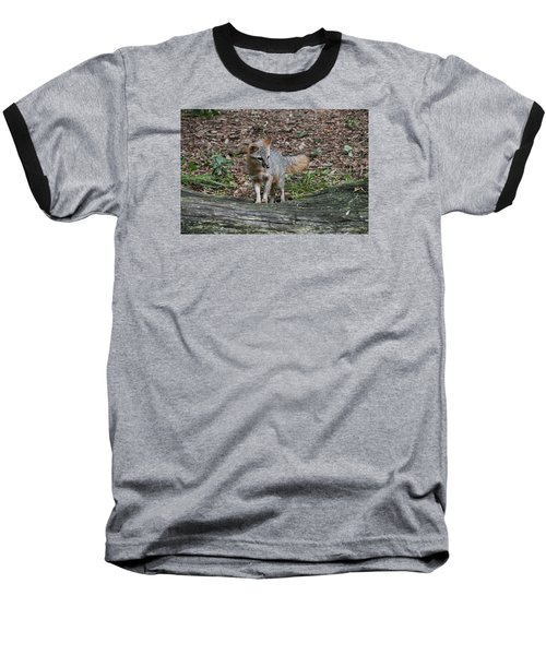 Grey Fox Baseball T-Shirt