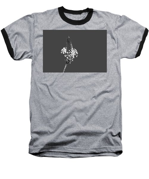 Grey Plaintain Baseball T-Shirt
