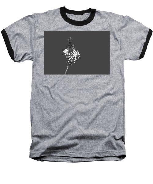 Grey Plaintain Baseball T-Shirt by Richard Patmore