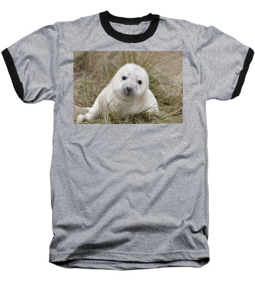 Grey Seal Pup Baseball T-Shirt