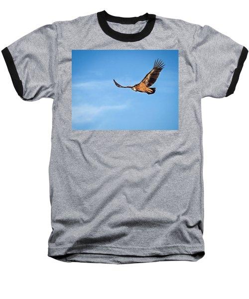 Griffon Vulture Baseball T-Shirt by Meir Ezrachi