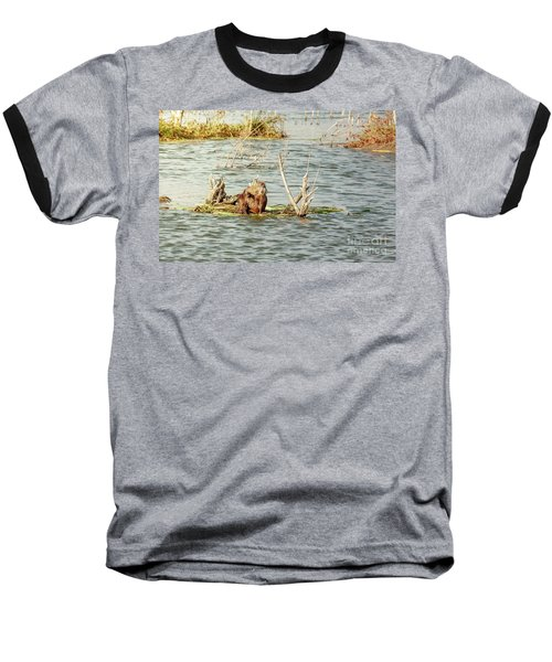 Grinning Nutria On Reeds Baseball T-Shirt by Robert Frederick