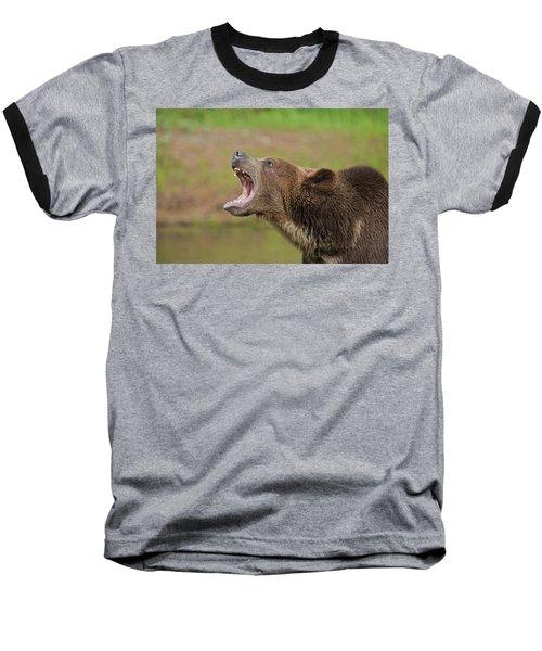 Grizzly Bear Growl Baseball T-Shirt
