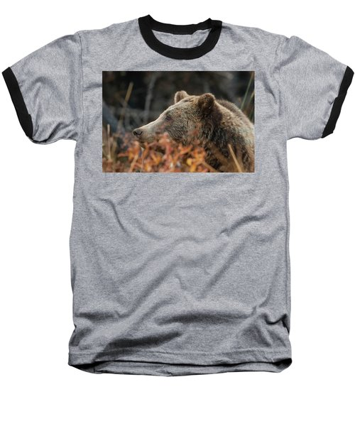 Grizzly Bear Portrait In Fall Baseball T-Shirt