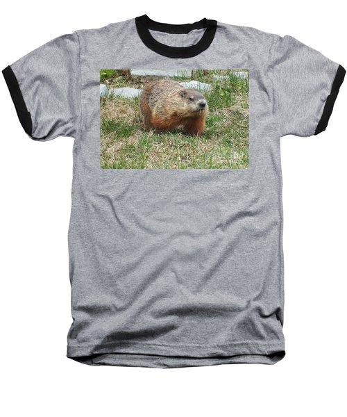 Baseball T-Shirt featuring the photograph Groundhog by Vicky Tarcau