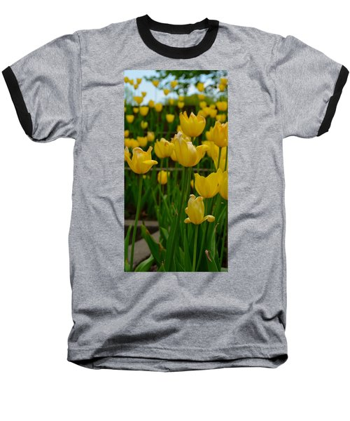 Grouping Of Yellow Tulips Baseball T-Shirt