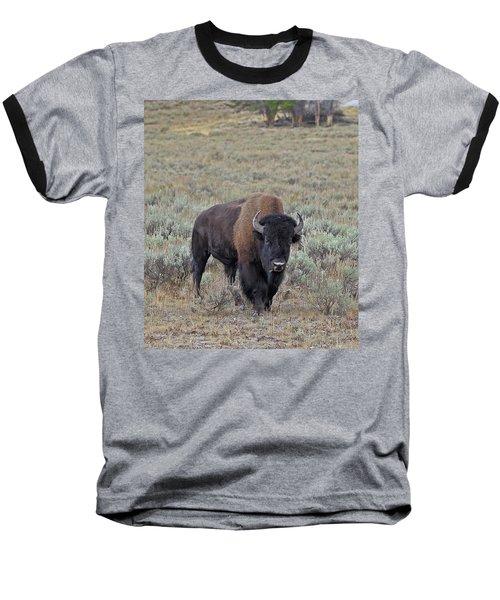 Handsome Bison Bull Baseball T-Shirt