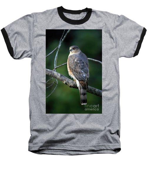 Handsome Sharp Shinned Hawk Baseball T-Shirt