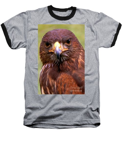 Harris Hawk Portriat Baseball T-Shirt by Stephen Melia
