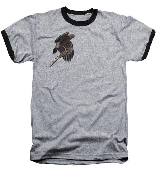 Harris Hawk - Transparent 2 Baseball T-Shirt by Nikolyn McDonald