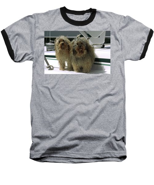 Havanese Dogs Baseball T-Shirt by Sally Weigand