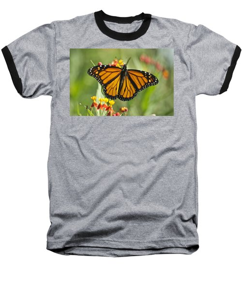 Hawaiian Monarch 3 Baseball T-Shirt