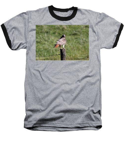 Hawk And Snake Baseball T-Shirt