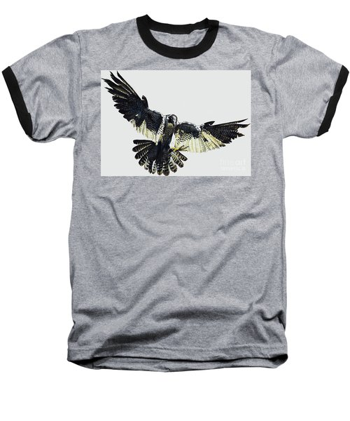 Hawk Baseball T-Shirt
