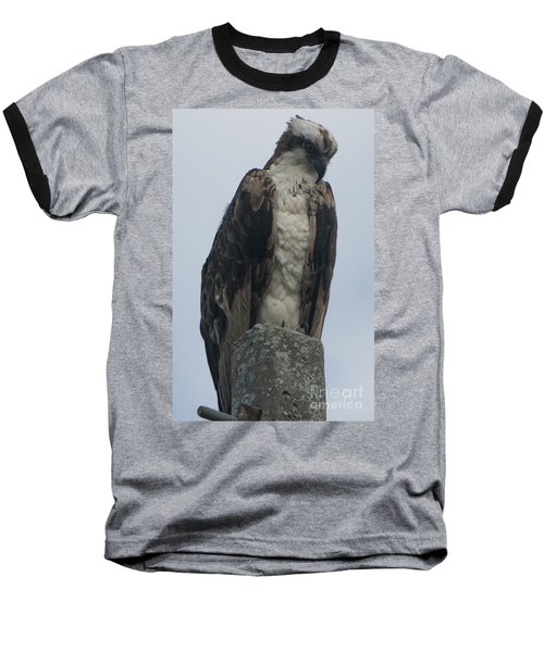 Hawk Facing Down Baseball T-Shirt