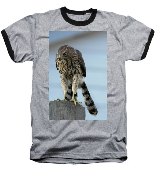 Hawk Fence Baseball T-Shirt