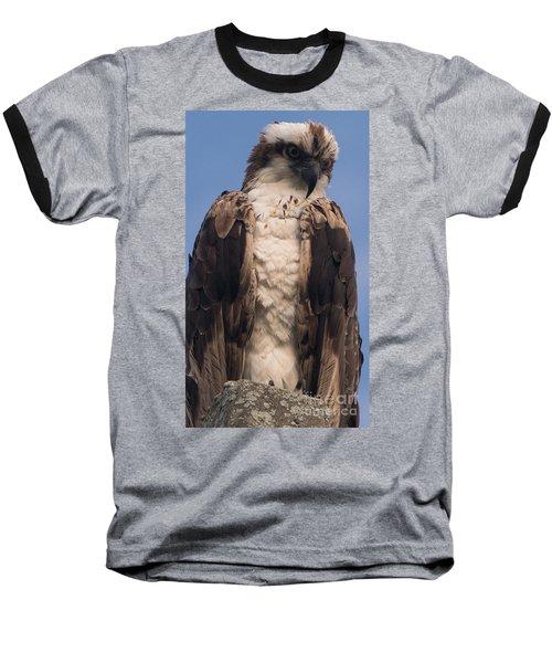 Hawk Glare Baseball T-Shirt