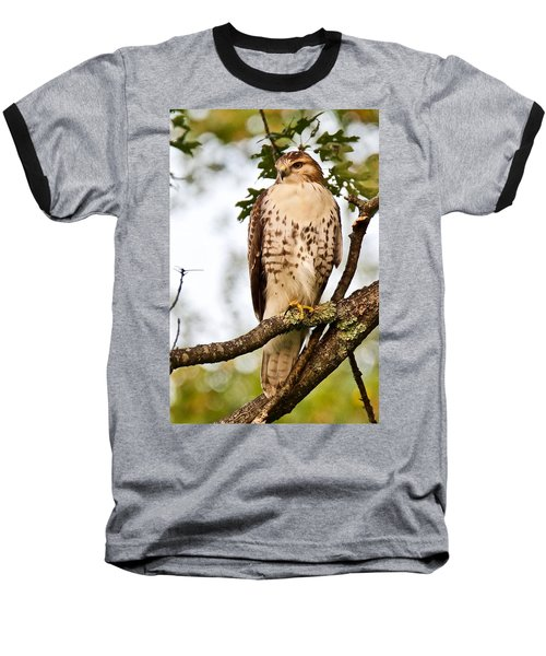 Hawk In Evening Light Baseball T-Shirt