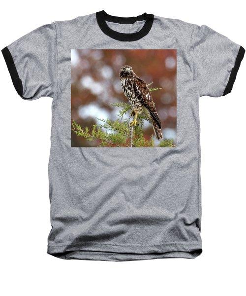 Red Shoulder Hawk Looking At Me Baseball T-Shirt