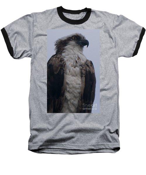 Hawk Looking Into The Distance Baseball T-Shirt