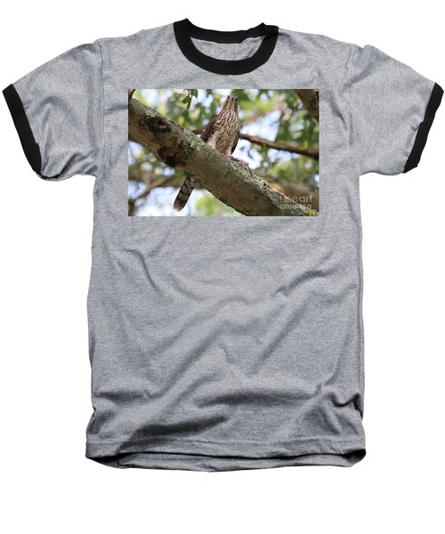 Hawk On A Branch Baseball T-Shirt